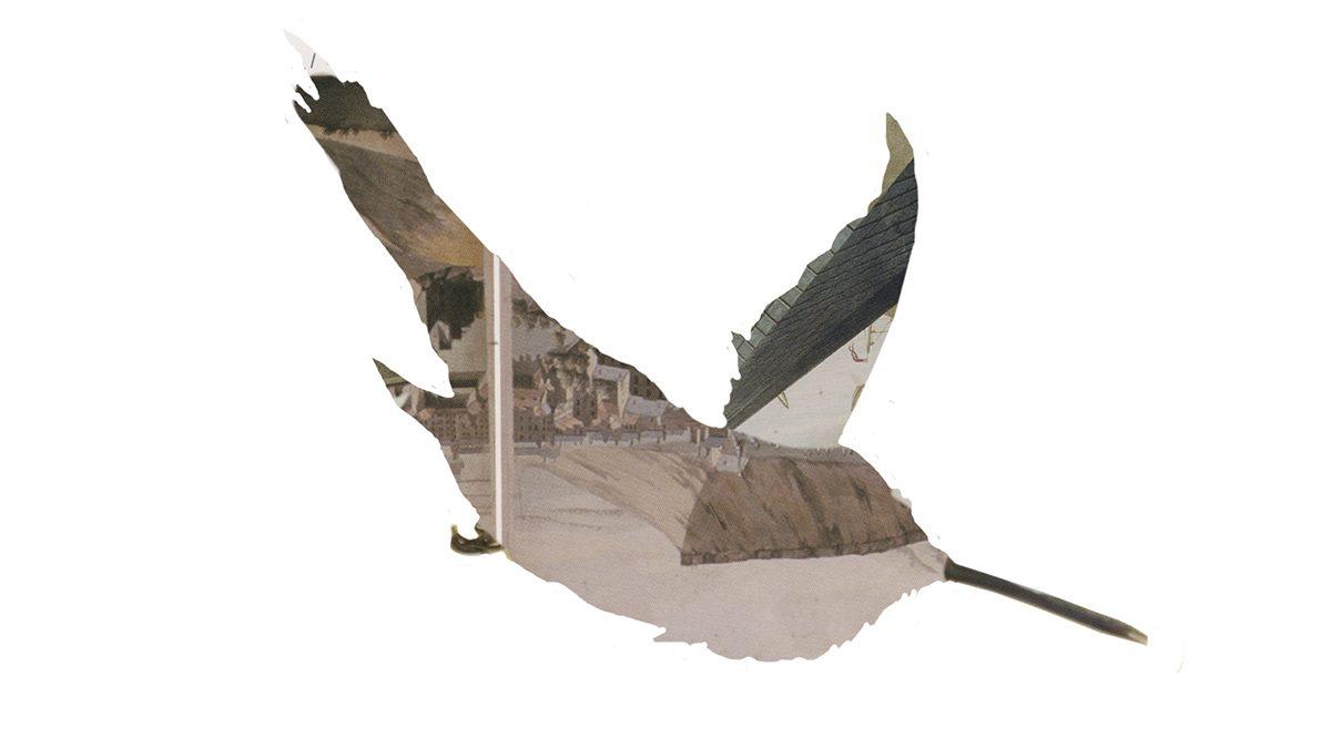 Sarah Fuller inkjet image of hummingbird
